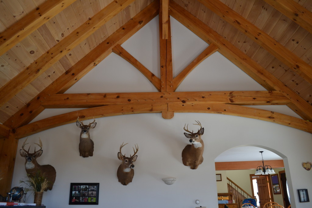 Interior frames with a pickling board finish in a living room with 4 taxidermy deer heads